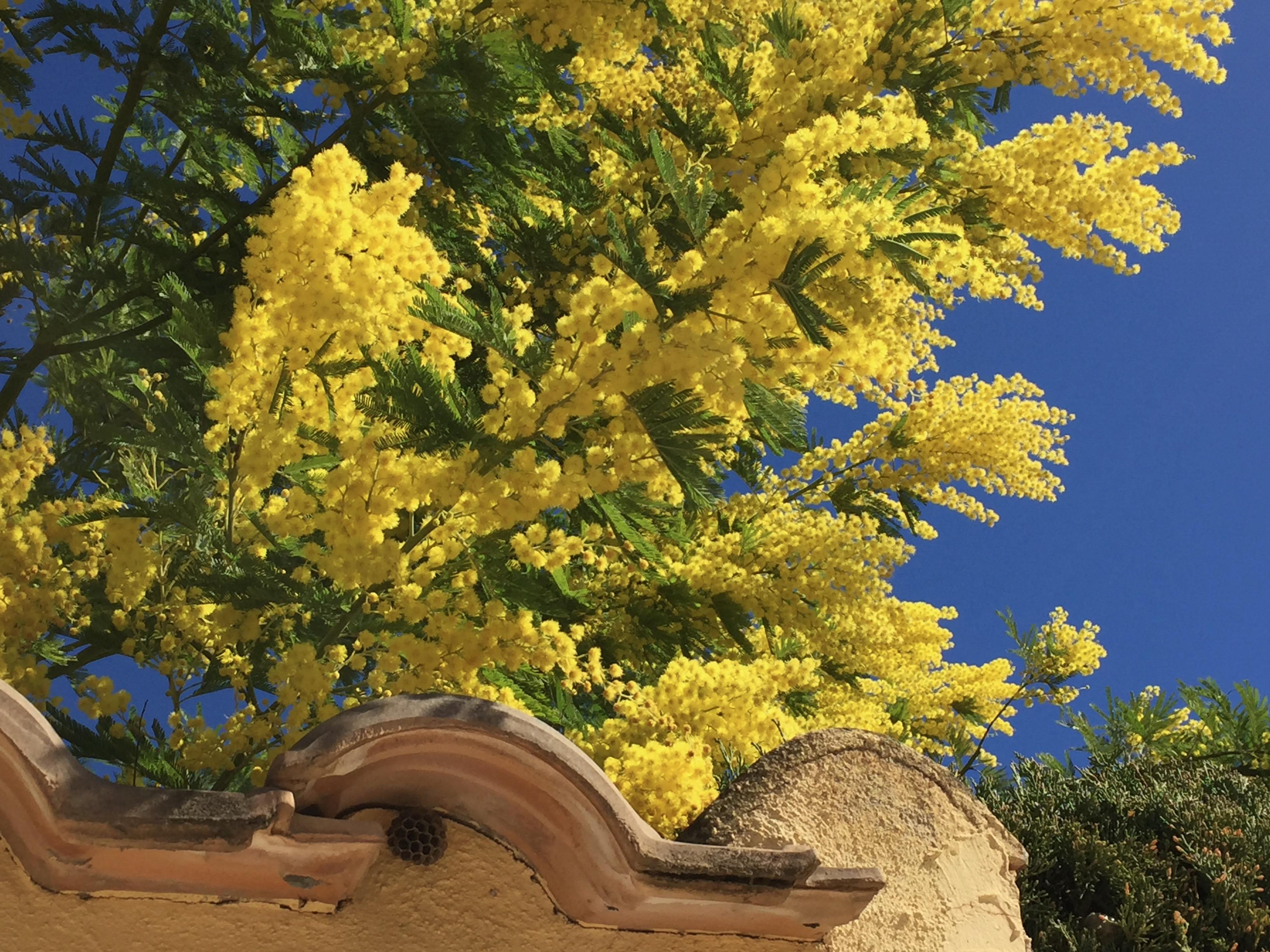 natuur na corona